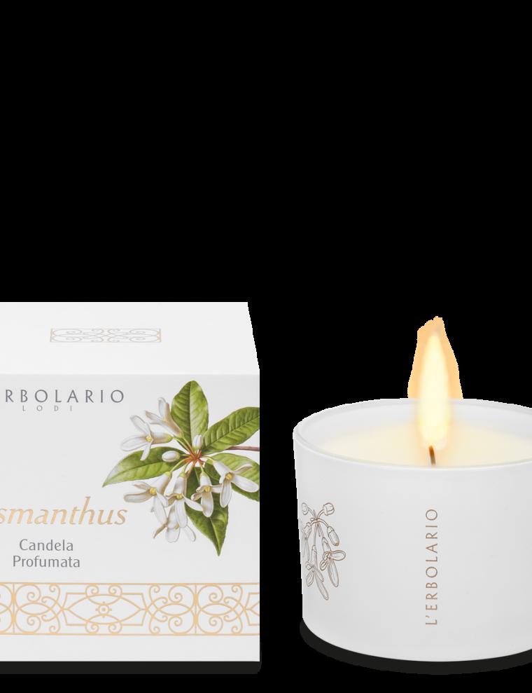 candela-osmanthus